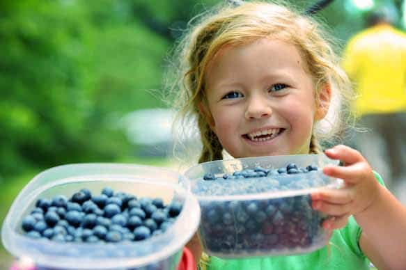 Visit Cedar Grove Blueberry Farm for its fifth annual Pick-a-ton Fundraiser and pick as many blueberries as you can for charity.