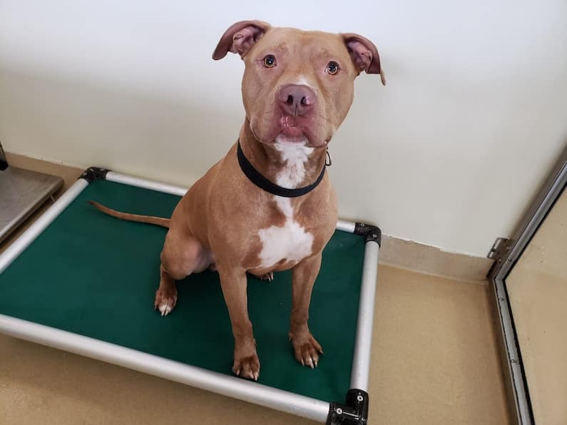 Kabo is a staff favorite at Orange County Animal Services