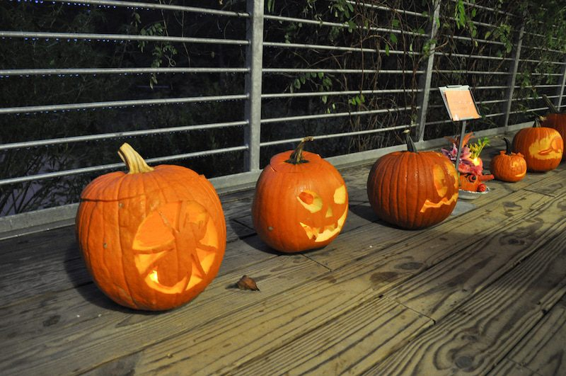 Pumpkins line a wooden pathway at the NCBG