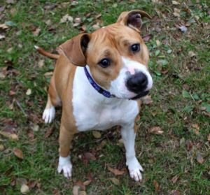 Heidi is an adoptable pet at Paws4ever