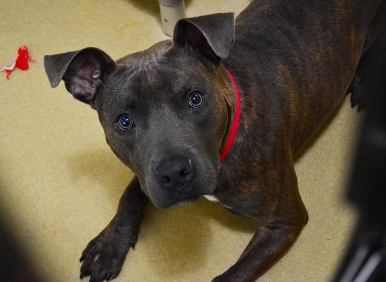 One look into Jax's eyes and you'll be happy to buy this handsome little man all the goodies he can handle.