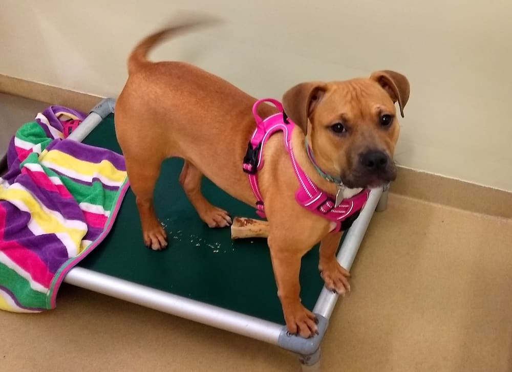 Rayne at Orange County Animal Services