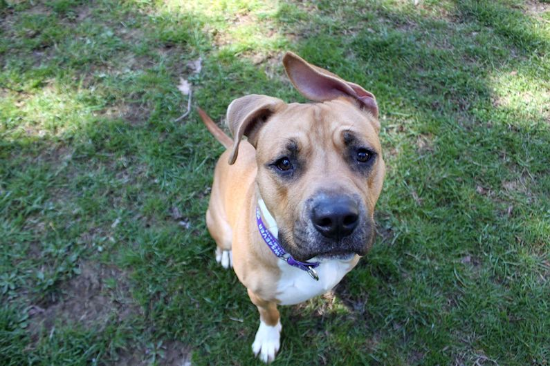 Yogi is a fun and loving guy who would love to meet you at Paws4ever