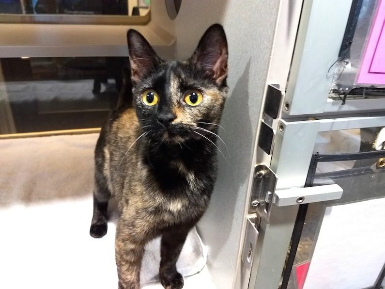 Amber is only 8 months old and she's ready to stay at home with you.