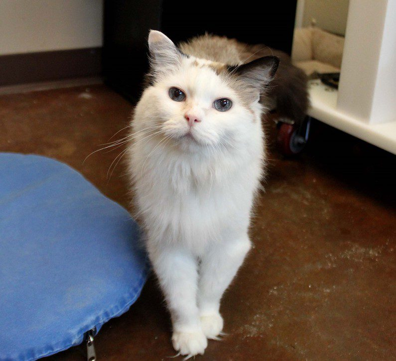 Pria is a 9-year-old kitty ready for a forever home.