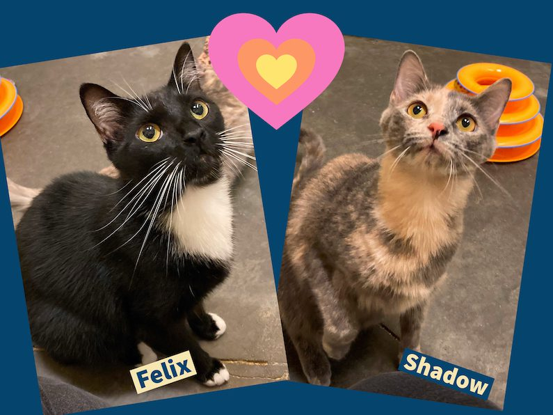 Meet Felix and Shadow are a bonded pair and need to be adopted together