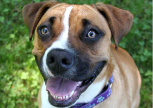 Roxie is waiting at Paws4ever for her forever home.