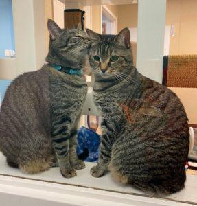 Adoptable cats Kiley and Kinsey