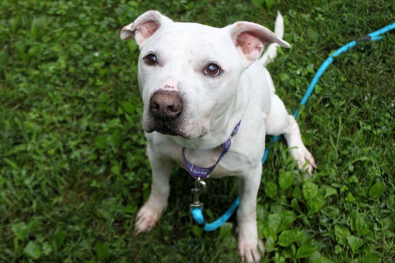 Tuff is looking for a forever family with a comfy couch and yummy treats. He is a great quarantine friend to binge-watch TV with.