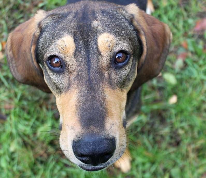 is a super goofy, sweet boy. We love his super floppy, long ears and the way he gallops around when he is happy.