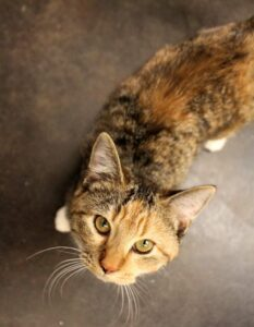 Edith is a 6-month-old kitten who is ready for her forever home.