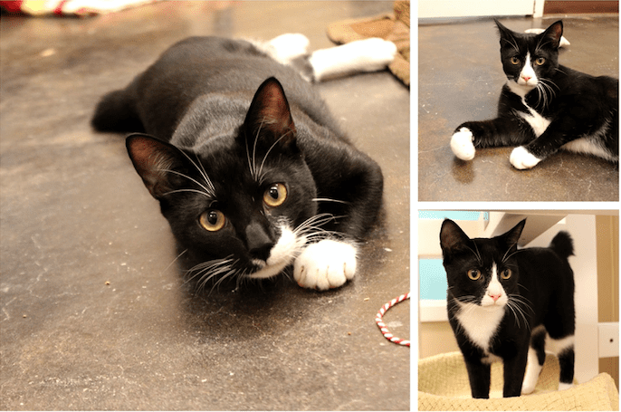 Edwin and Wallace are brothers who are waiting at Paws4ever for their forever homes