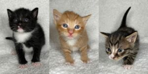 Kittens at Paws4ever