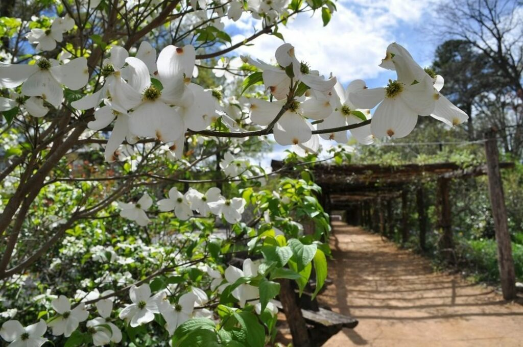 The Coker Arboretum offers tours this weekend.