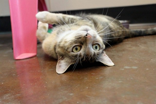 Maybelle, Adoptable Pet of the Week