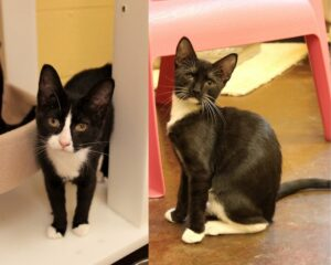 Zachary and Ziva's siblings were all adopted, but these two love bugs have been patiently waiting their turn.