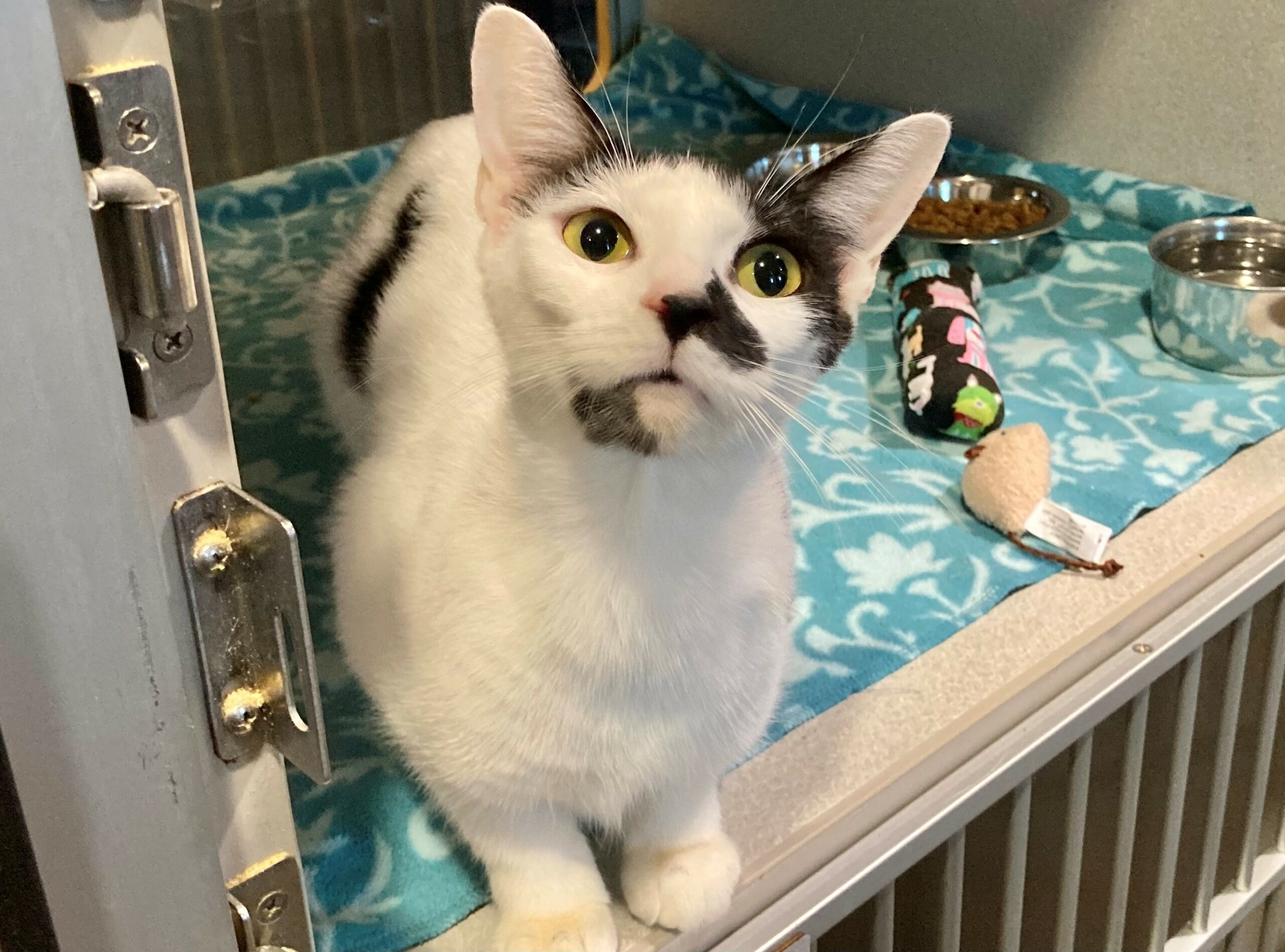 Chatta from Orange County Animal Services